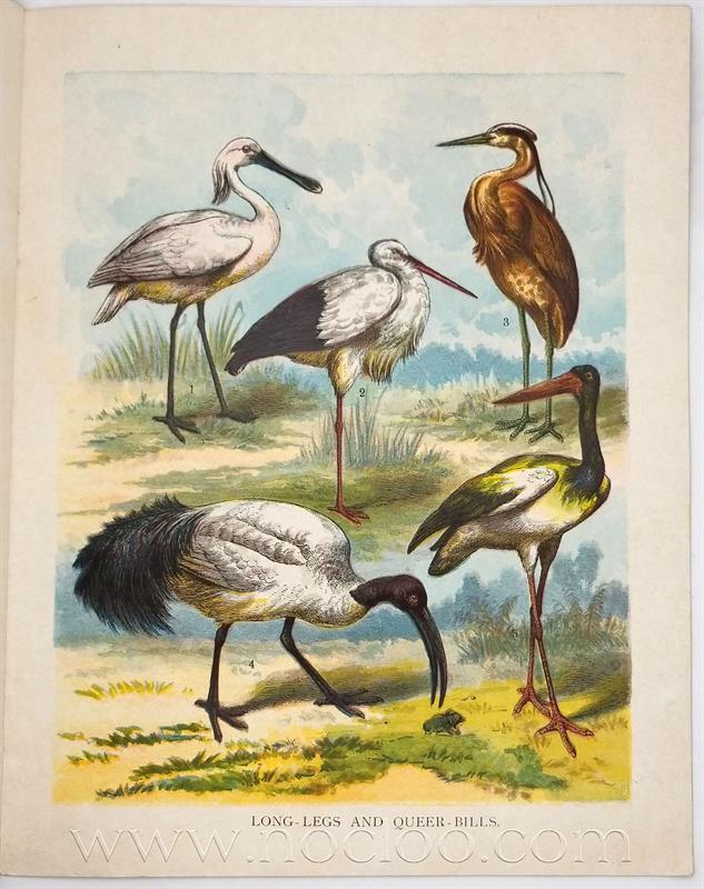 mb birds1 3