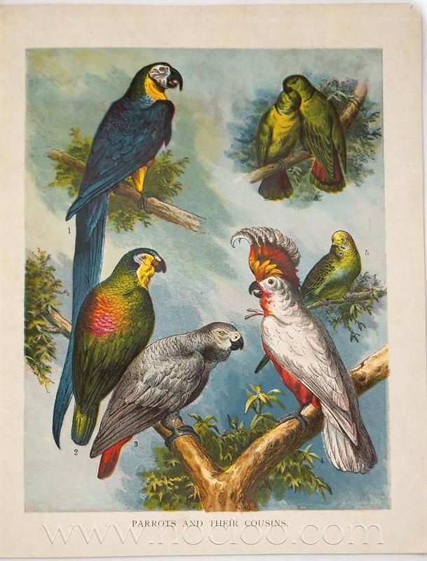mb birds1 6