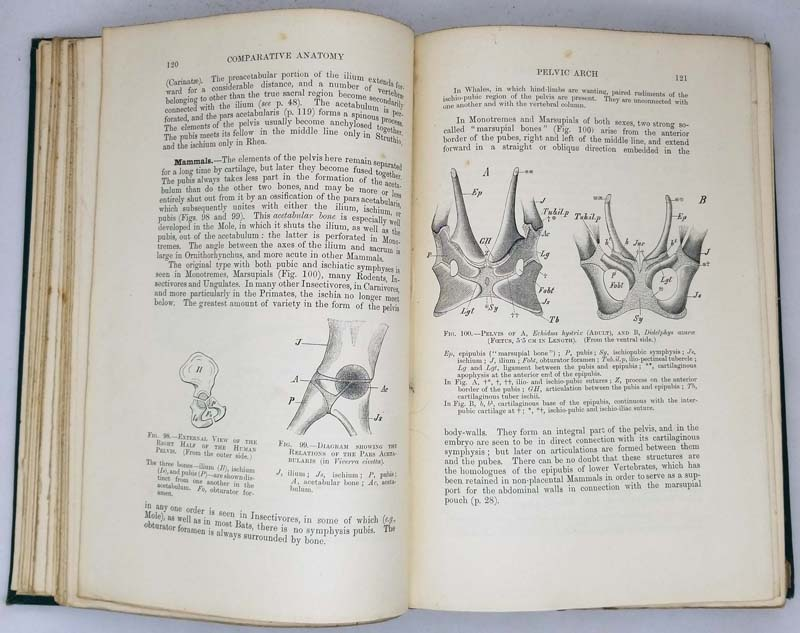 Elements of the Comparative Anatomy of Vertebrates - Robert Wiedersheim 1897